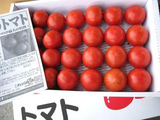 tomato18.jpg