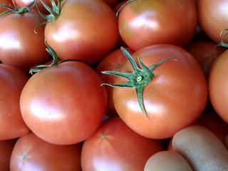tomato2015.jpg