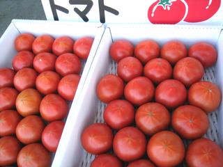 tomato2016.jpg